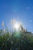 透镜火光通过南美大草原灌木 免版税库存图片