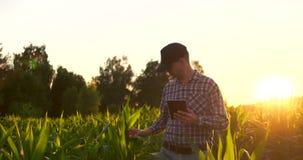 透镜火光:使用数字片剂计算机的农夫在培养的大豆庄稼领域,现代技术应用  股票视频