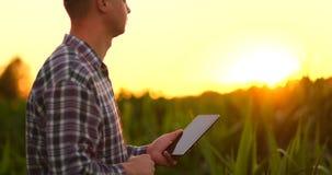 透镜火光:使用数字片剂计算机的农夫在培养的大豆庄稼领域,现代技术应用  影视素材