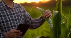 透镜火光:使用数字片剂计算机的农夫在培养的大豆庄稼领域,现代技术应用  股票录像