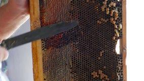 透露蜂窝用从蜡的蜂蜜与刀子 股票视频