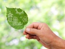 递举行绿色城市概念,切开植物叶子  库存照片