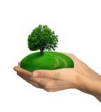 递人力结构树 免版税图库摄影
