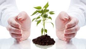递保护的树苗 免版税库存照片