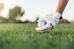 递把高尔夫球放的妇女在发球区域上 库存图片