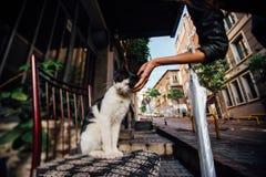 递抚摸在一把椅子的女孩一只逗人喜爱的猫在街道上 大气,火鸡 免版税图库摄影