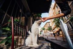 递抚摸在一把椅子的女孩一只逗人喜爱的猫在街道上 大气,火鸡 免版税库存照片