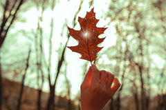 递拿着一片红槭叶子反对晴朗的天空 库存图片