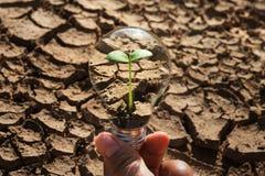 递拿着与年轻绿色植物生长和土壤的电灯泡 免版税库存图片
