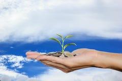 递拿着在堆硬币的生长树新芽有天空背景 免版税库存图片