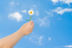递拿着在蓝天前面的一朵雏菊 免版税图库摄影