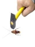 递拿着意欲的锤子杀害在白色背景隔绝的蟑螂 免版税图库摄影