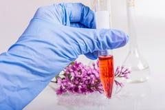 递拿着有自然成份的提取的一支管在香料厂的 免版税库存图片