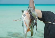 递拿着束新鲜的被抓的各种各样的鱼 库存照片