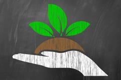 递拿着植物或幼木当农业概念 免版税库存图片