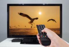 递拿着电视遥控与电视和鸟屏幕 库存图片