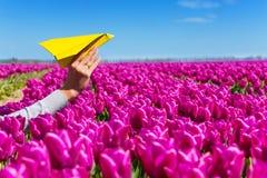 递拿着纸平面和紫色郁金香看法 库存图片