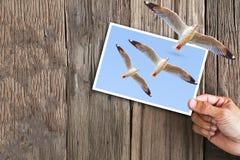 递拿着飞行海鸥照片与另一次海鸥飞行的在葡萄酒难看的东西木背景的框架外面 免版税库存照片