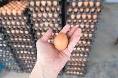 递拿着从养鸡场的鸡蛋全部的在包裹的鸡蛋 库存图片