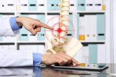 递指向脊椎,疝气概念原因的骨骼的医生 库存照片