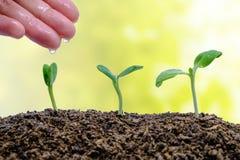 递生长从在被弄脏的自然本底的土壤的浇灌的新芽 库存图片