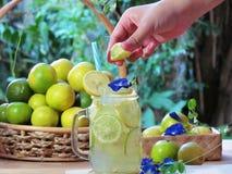 递紧压石灰入玻璃鸡尾酒,石灰被切的新鲜的citru 库存图片