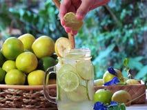 递紧压石灰入玻璃鸡尾酒,石灰被切的新鲜的citru 免版税库存照片