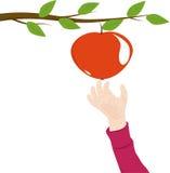 递苹果的儿童伸手可及的距离 库存图片
