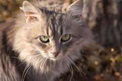 逗人喜爱一只美丽的猫的纵向 免版税库存图片