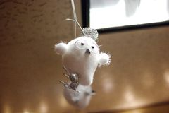 逗人喜爱一点雪猫头鹰 免版税库存照片