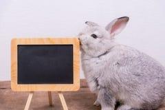 逗人喜爱兔子和黑板 免版税库存照片