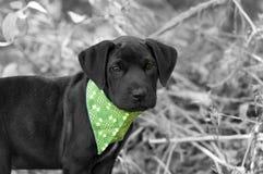 逗人喜爱可爱的小狗 库存照片