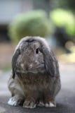 逗人喜爱婴孩的兔宝宝砍兔子 免版税图库摄影