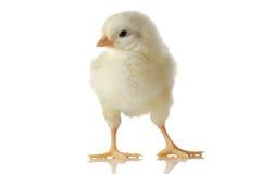 逗人喜爱婴孩的鸡一点 库存图片