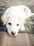 逗人喜爱小狗坐的看哀伤 图库摄影
