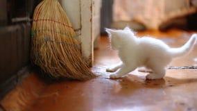 逗人喜爱小猫使用室内 影视素材
