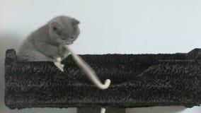 逗人喜爱小猫使用 股票录像