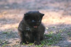 逗人喜爱小猫哭泣 免版税库存图片