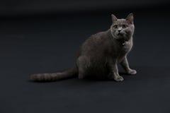逗人喜爱小猫走 库存图片