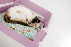 逗人喜爱懒惰猫休息 免版税库存图片