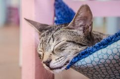 逗人喜爱懒惰猫休息 免版税图库摄影