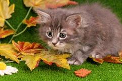 逗人喜爱灰色小猫使用 免版税库存照片