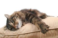 逗人喜爱猫的坐垫 免版税库存图片