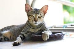 逗人喜爱猫的黑色和的wihite 免版税库存图片