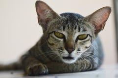 逗人喜爱猫的黑色和的wihite 库存图片