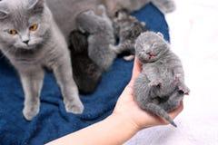 逗人喜爱的一只天的小猫 免版税库存图片