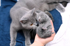 逗人喜爱的一只天的小猫 库存照片