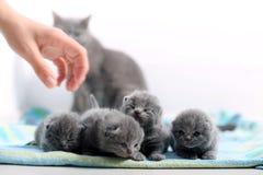 逗人喜爱的一只天的小猫 免版税图库摄影