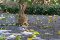 逗人喜爱的一点兔宝宝开会一样相当象请您 免版税库存图片
