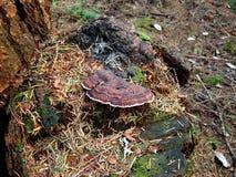 逗人喜爱的一点树shroom 库存图片